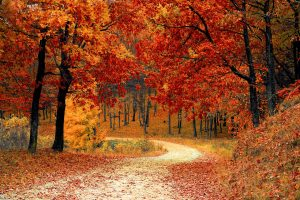Fall Home Maintenance Tips - Outdoors - Stone Insurance Group