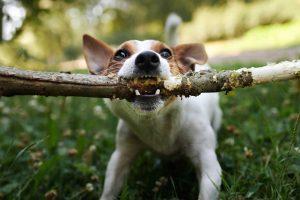 When The Dog Bites, Be Prepared with Proper Liability Coverage-Stone Insurance Group